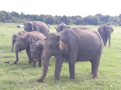 verrassend Sri Lanka
