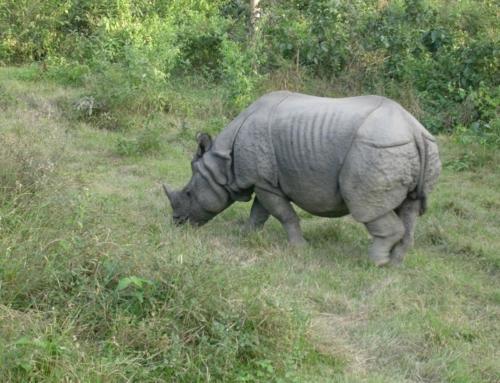 Rondreis Assam
